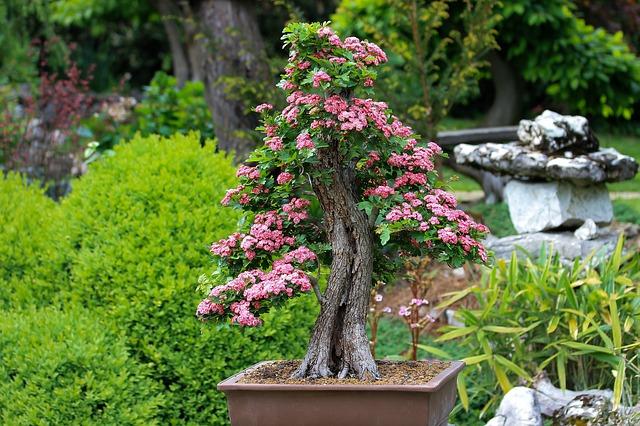 日本庭園の盆栽